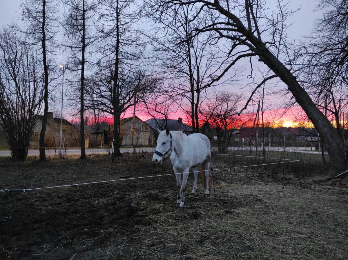 Zirgu pansija